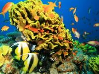Океанариум в Анталии (Antalya Aquarium), Турция.