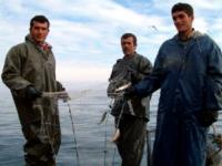 В Турции могут выловить всю рыбу