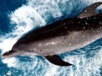 Дельфинарий, Кемер (Dolphinarium Kemer), Турция