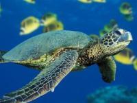 В Анталье открылся музей исчезающих морских обитателей