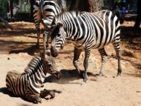 Зоопарк в Анталии (Hayvanat Bah?esi), Турция
