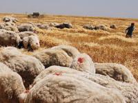 Увеличился объем инвестиций в юго-восточные области Турции