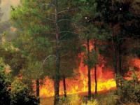 в Турции увеличилась опасность возникновения лесных пожаров