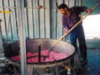 Третья часть населения Турции работает неофициально
