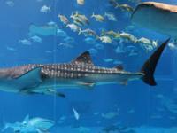 Новый океанариум в Анталье, Antalya Aquarium