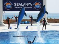 Дельфинарий Sealanya Dolphinpark, Тюрклер, Аланья, Турция.