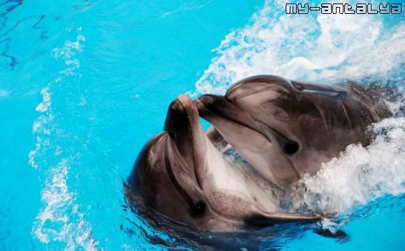 А еще дельфины могут кружить в вальсе.
