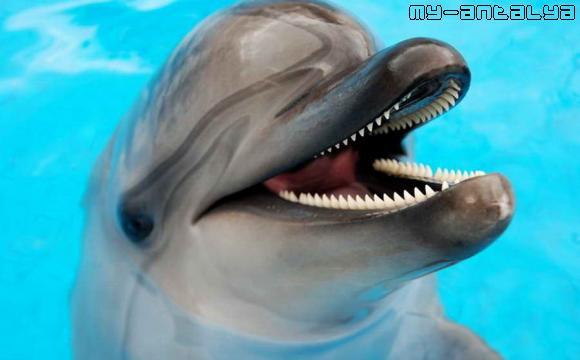 Симпатичный дельфин.