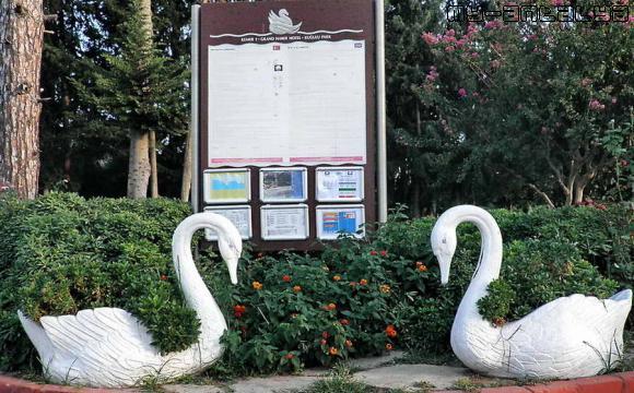 Вот такие симпатичные лебеди встречают посетителей парка...
