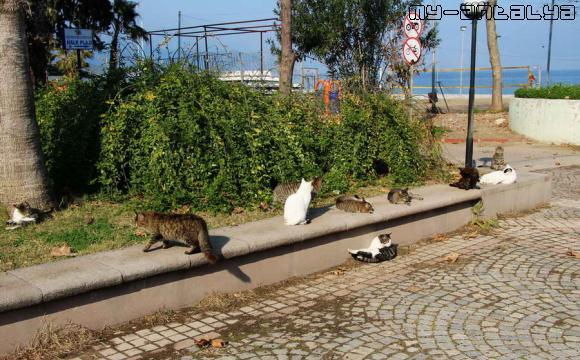 Кошки в парке Кемера, Турция.