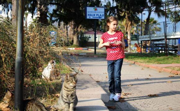 Ребёнок и кошки в парке.