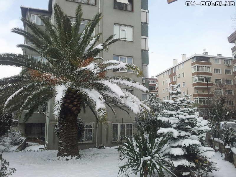 Необычно видеть пальмы в снегу. Стамбул, Турция, январь 2012.
