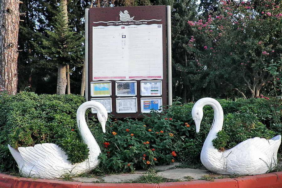 Вот такие симпатичные лебеди встречают посетителей парка.