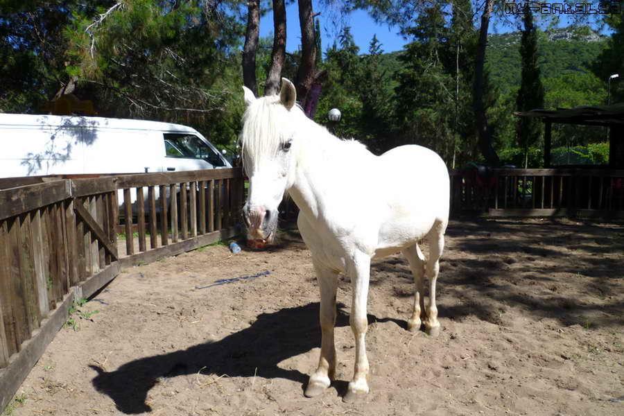На этой замечательной лошадке можно покататься.