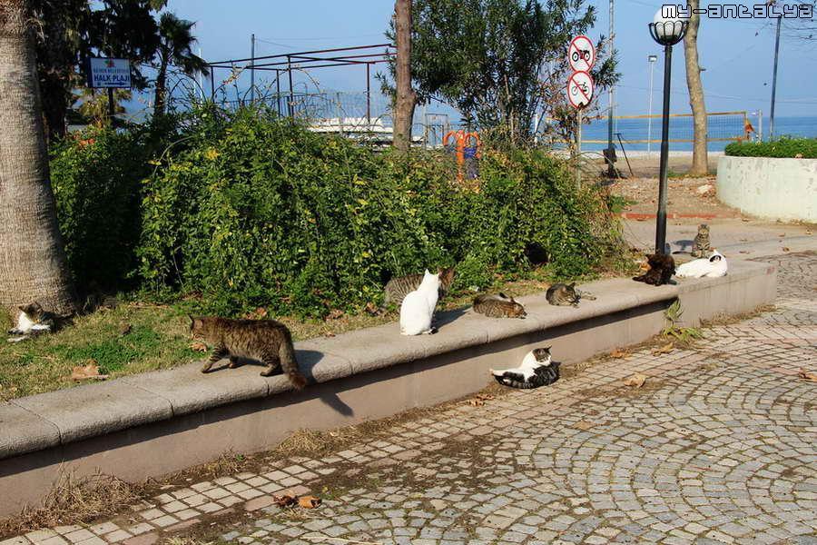 В парке, впрочем как и повсюду в Турции, огромное количество кошек разных пород и расцветок.